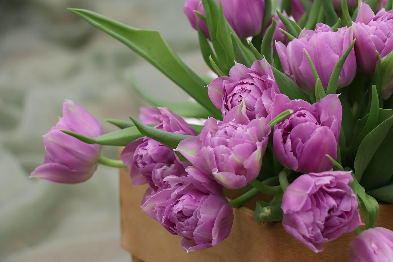 פרחים בארגז